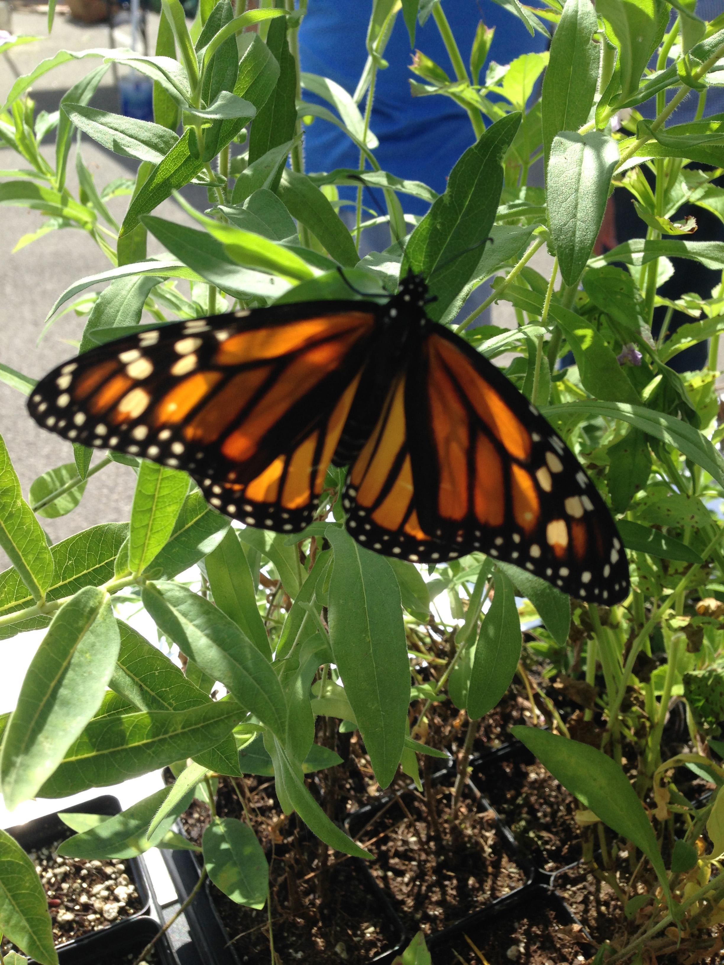 market-monarch