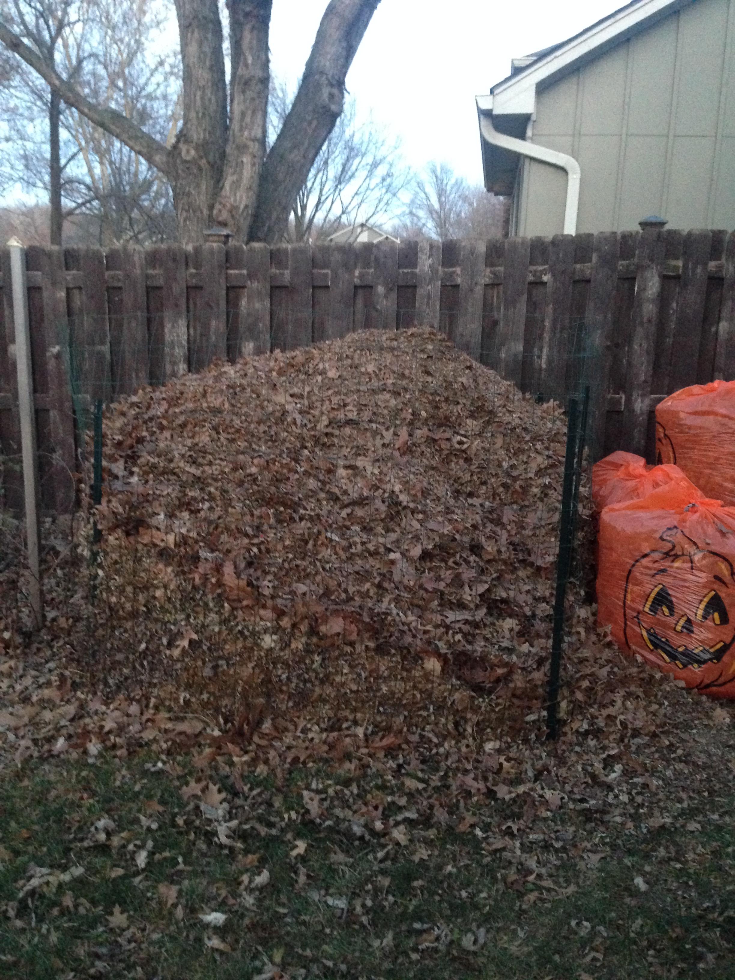 Leaf Pile - November 17